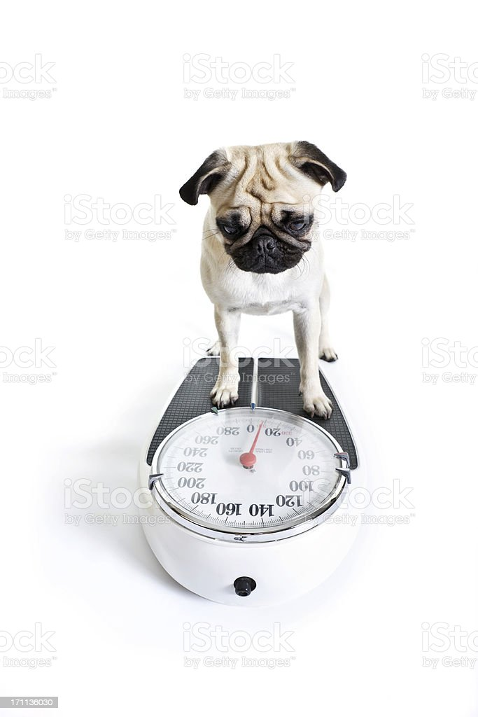 Weight Watcher stock photo