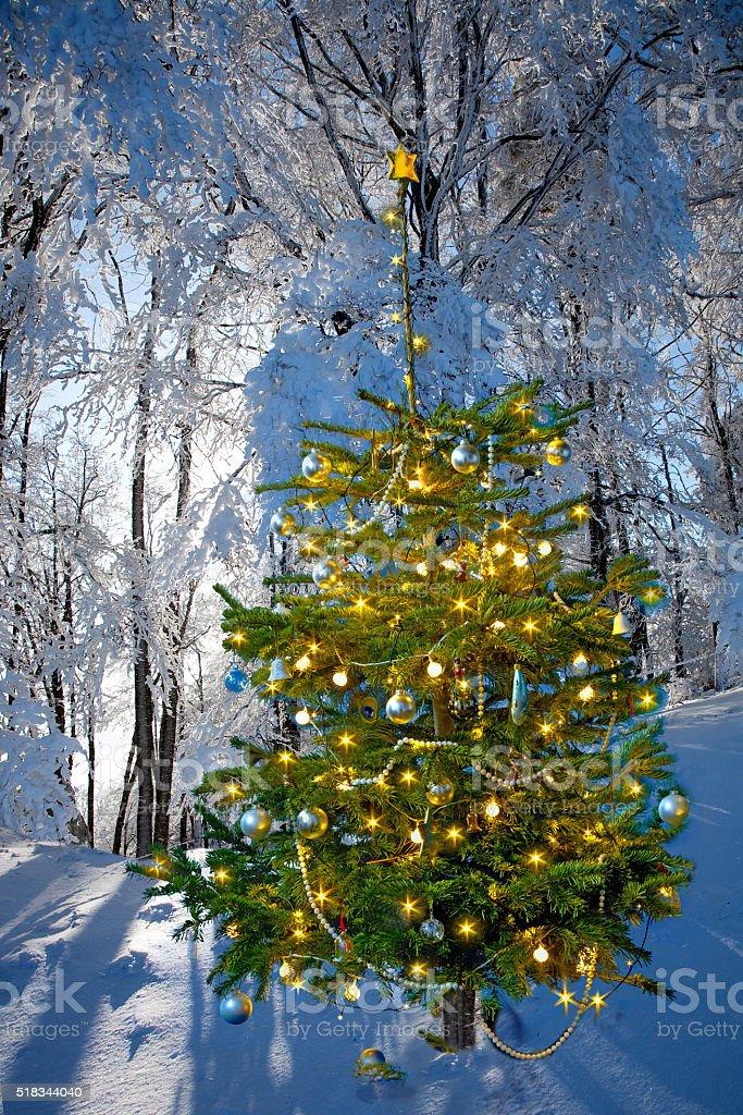 Weihnachtswald stock photo