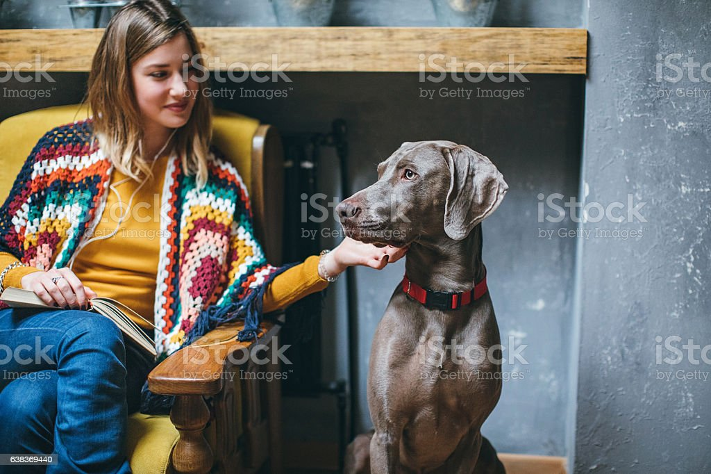 Weimaraner dog and his owner in pet friendly cafe stock photo