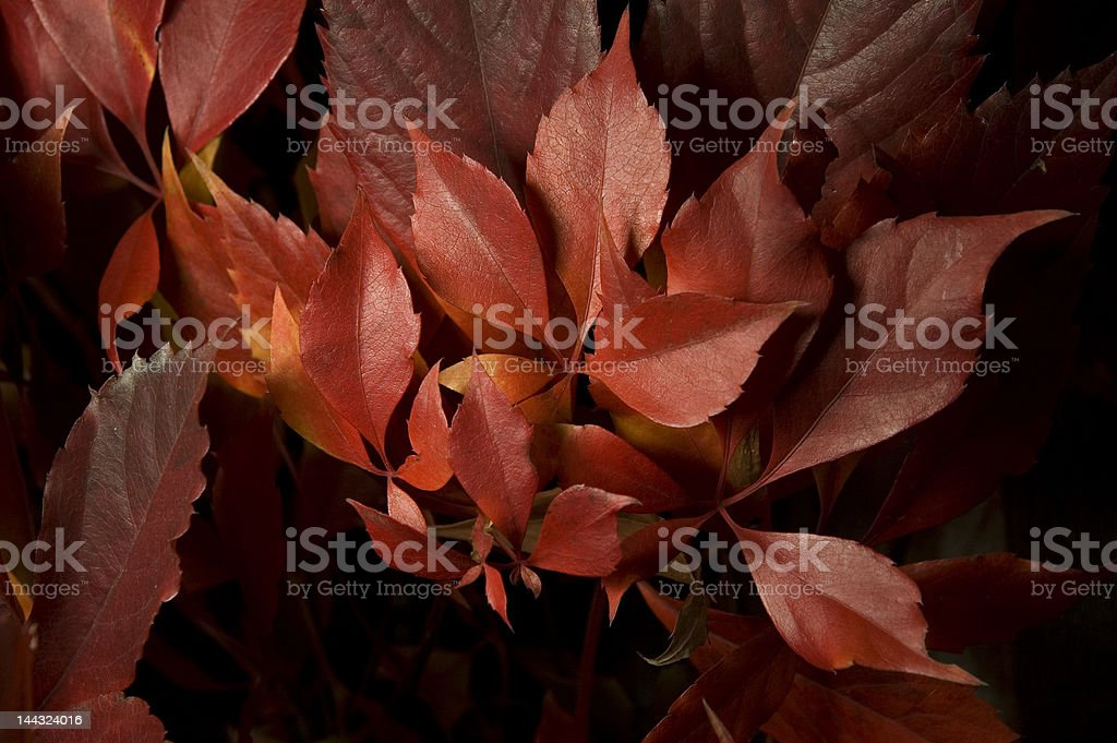 Weird Leaf 02 stock photo