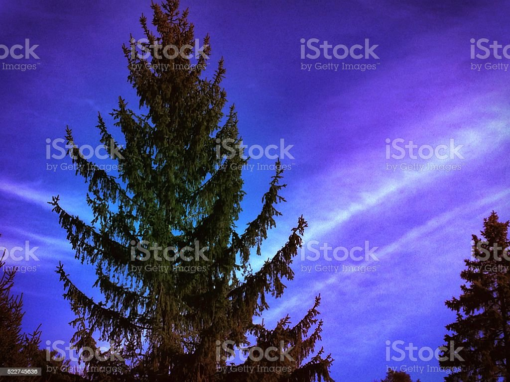 Weird sky falls on a pine tree stock photo