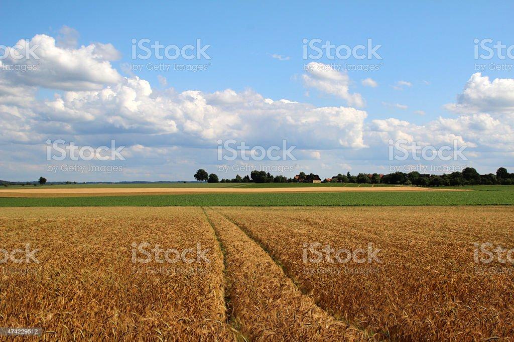 Weizenfelder stock photo