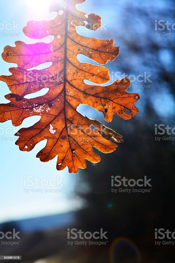 welcome autumn stock photo