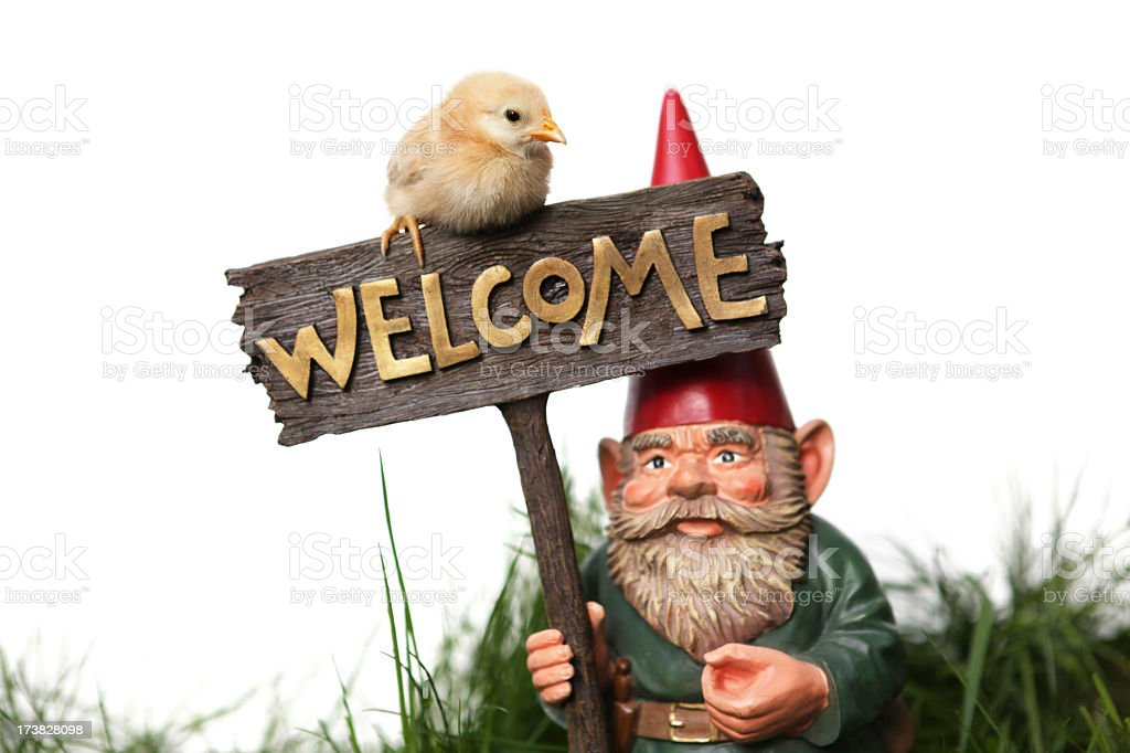 Welcome gnome and chick royalty-free stock photo