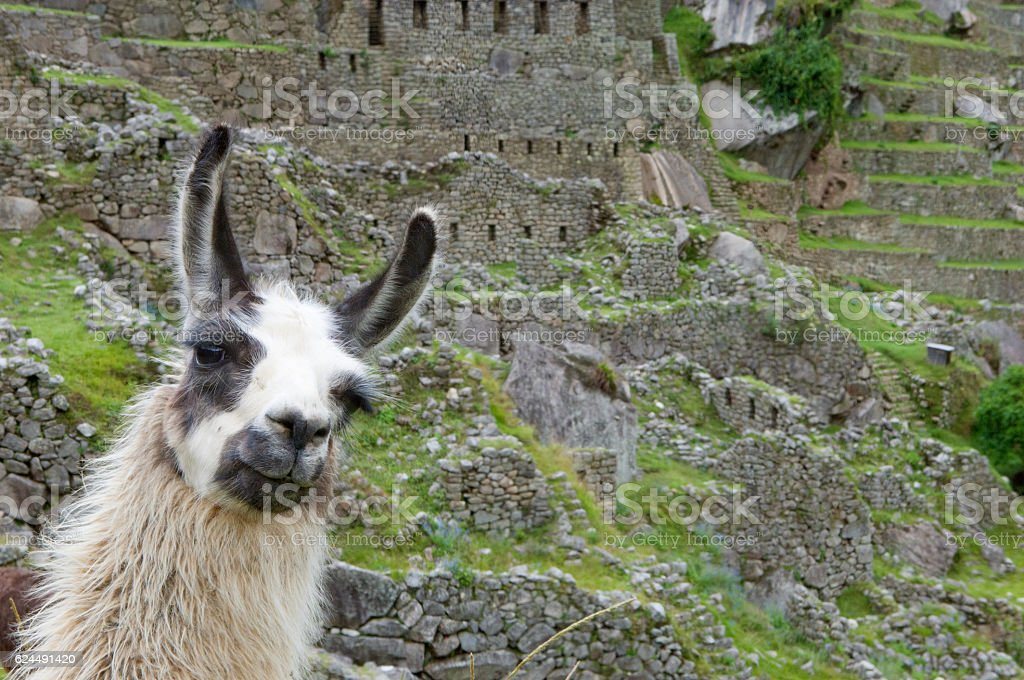 Welcome to Machu Picchu stock photo