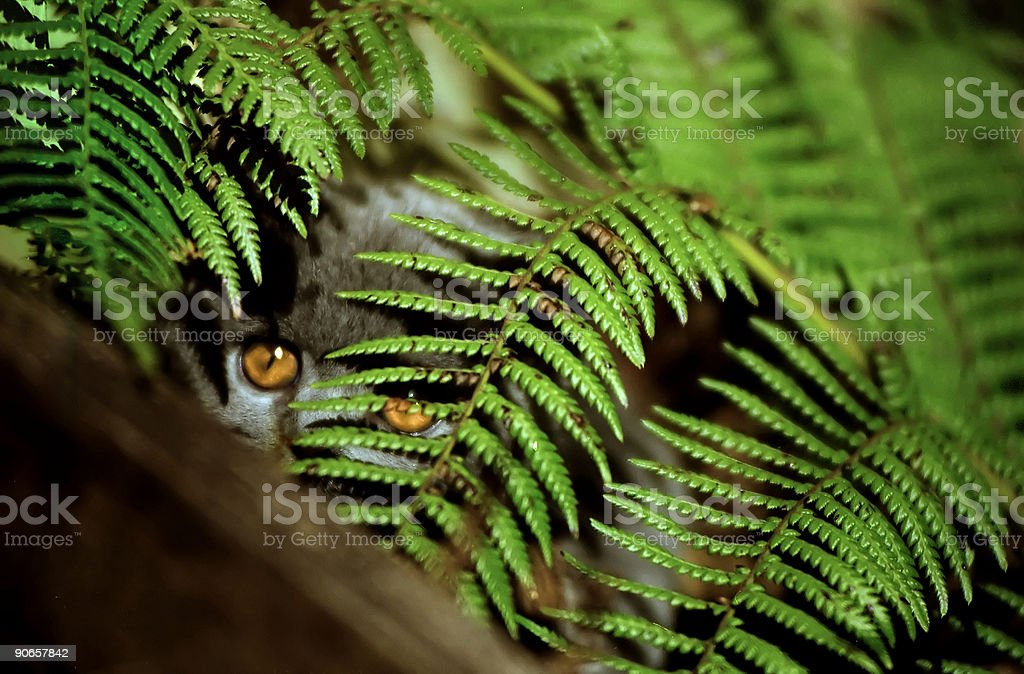 Welcome to the Jungle royalty-free stock photo