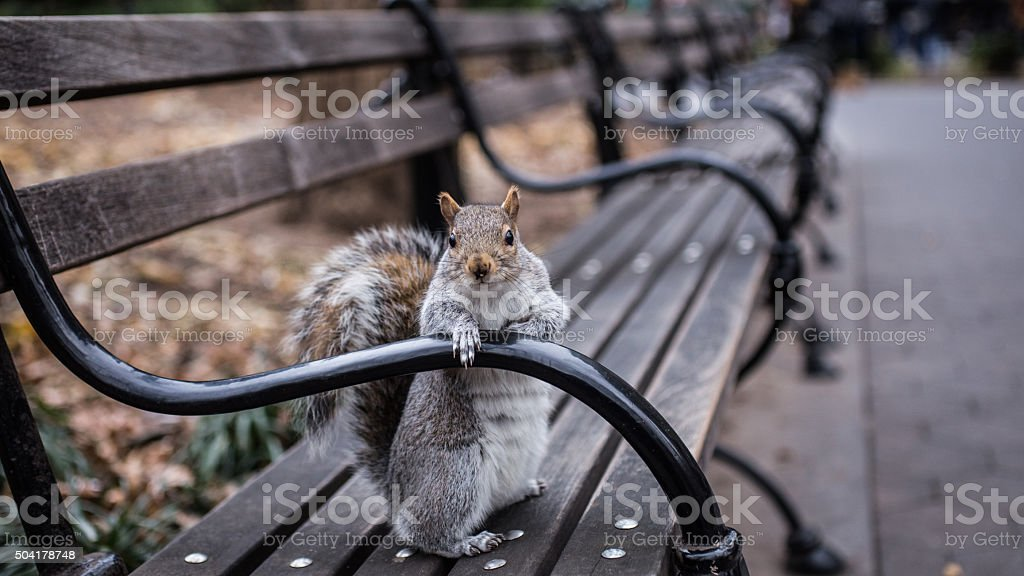 Welcoming Squirrel in Washington Square stock photo