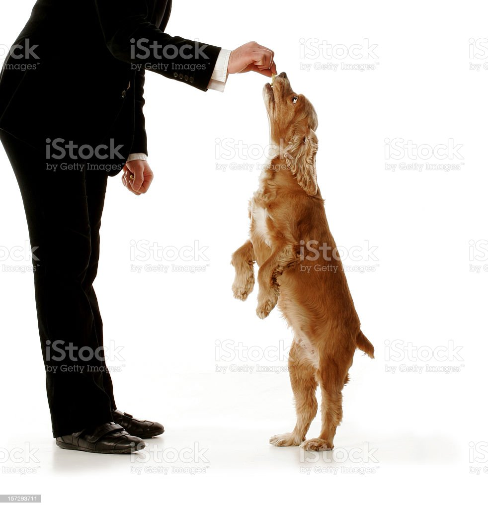 Well dressed man giving dog a treat. royalty-free stock photo