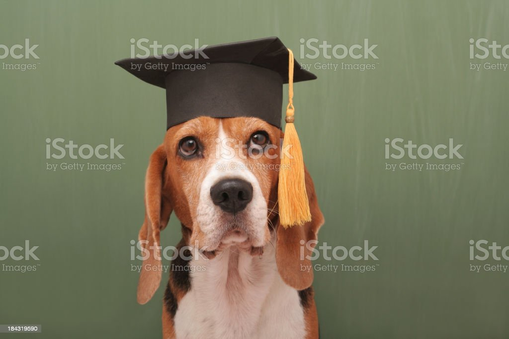 Well Educated Dog stock photo