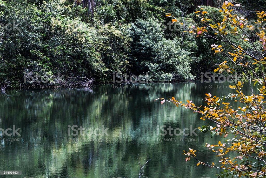 Bien de l'eau verte photo libre de droits