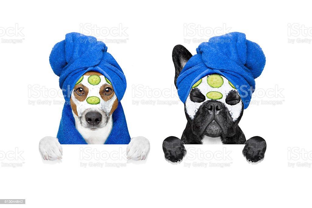 wellness beauty mask row of dogs stock photo