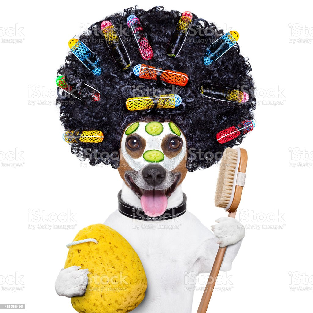 wellness dog royalty-free stock photo