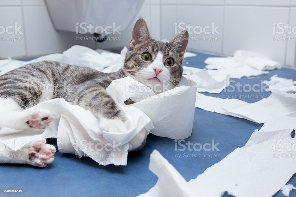 wellness in the bathroom stock photo