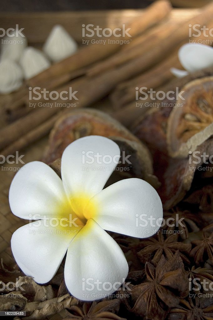 Wellness Spa Flower stock photo