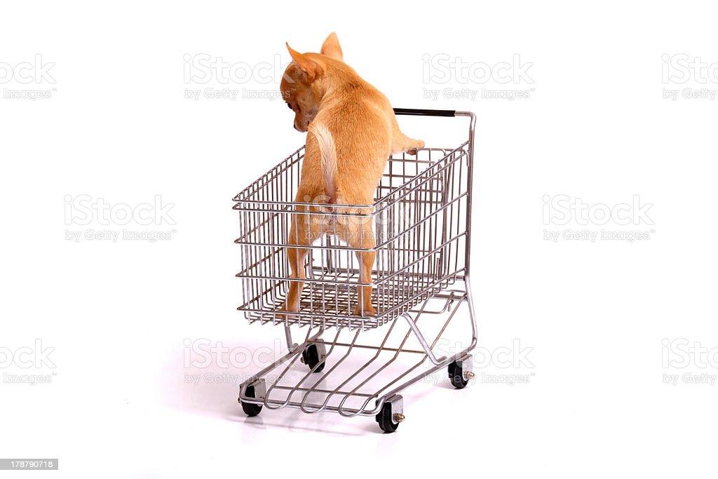 Welpe im Einkaufswagen stock photo