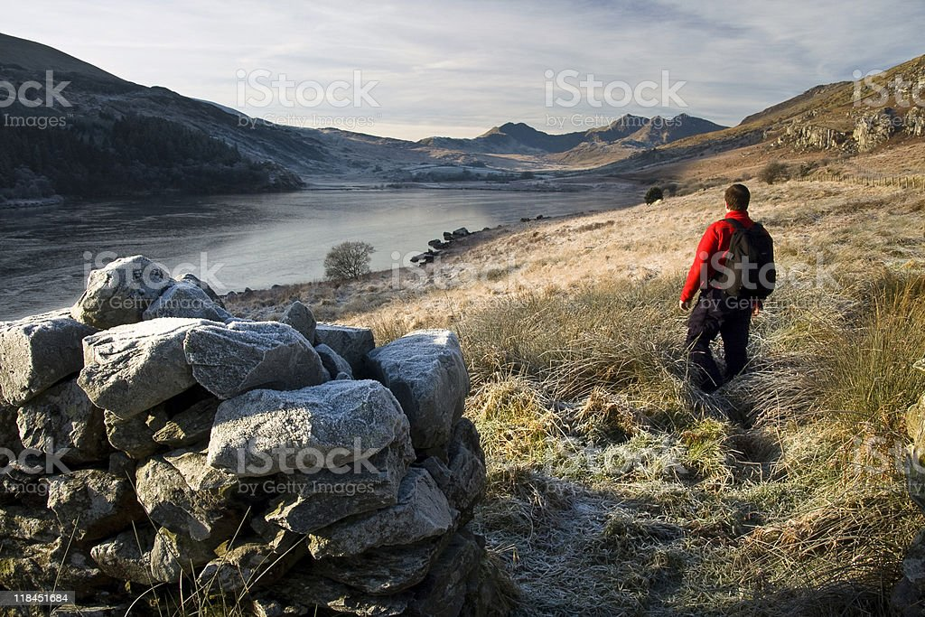Welsh Walker stock photo