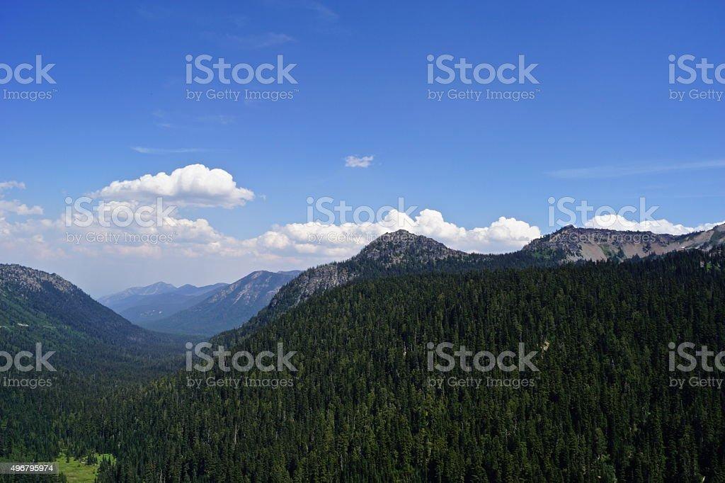 Wenatchee Forest Valley stock photo