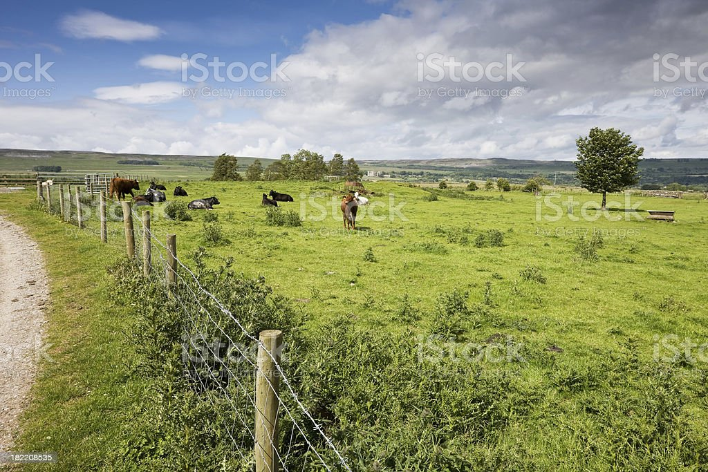 Wensleydale Country Scene in Yorkshire stock photo