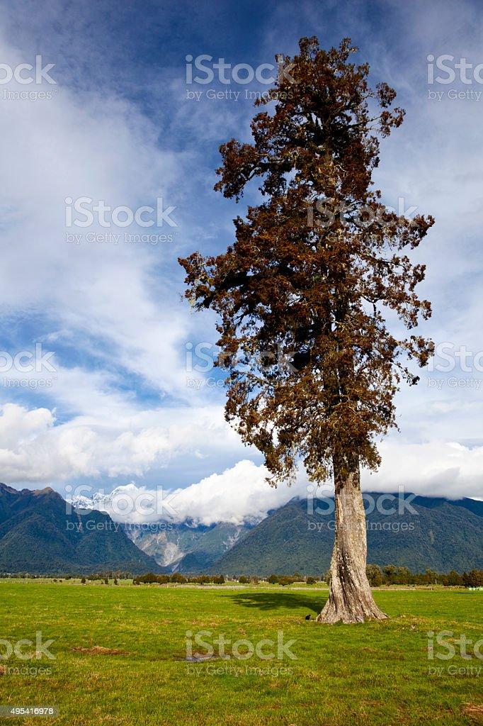 West Coast New Zealand Landscape stock photo