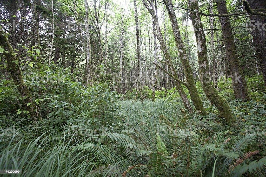 West Coast rain forest stock photo