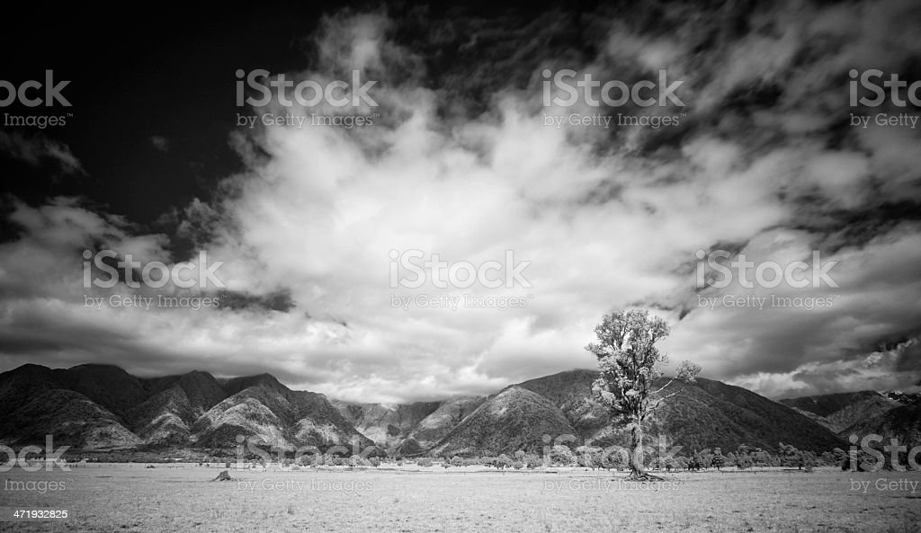 West Coast Trees, New Zealand stock photo