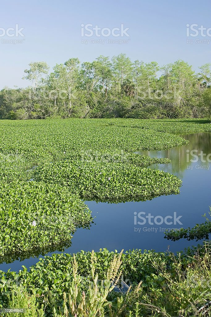 West Everglades Florida stock photo