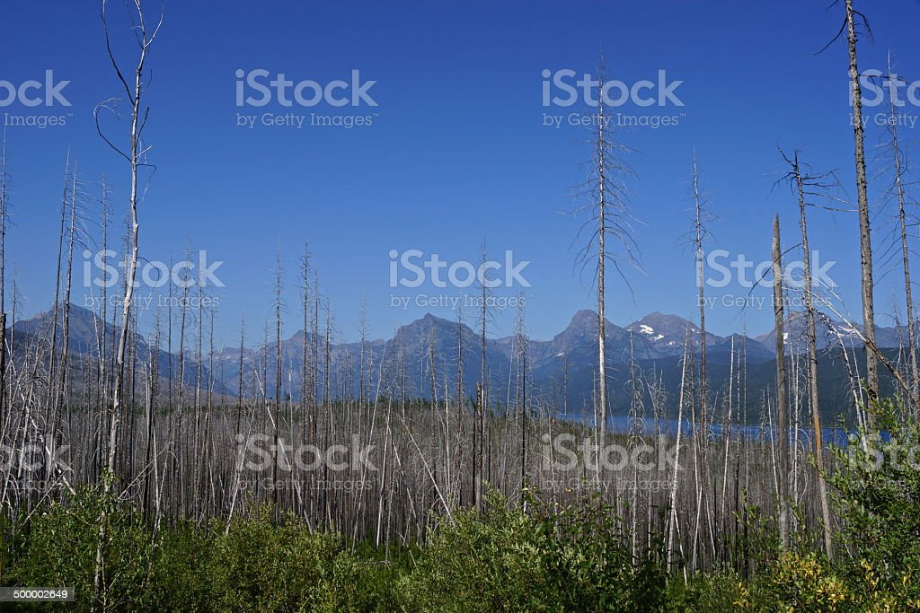 West Glacier Wildfire Effect stock photo