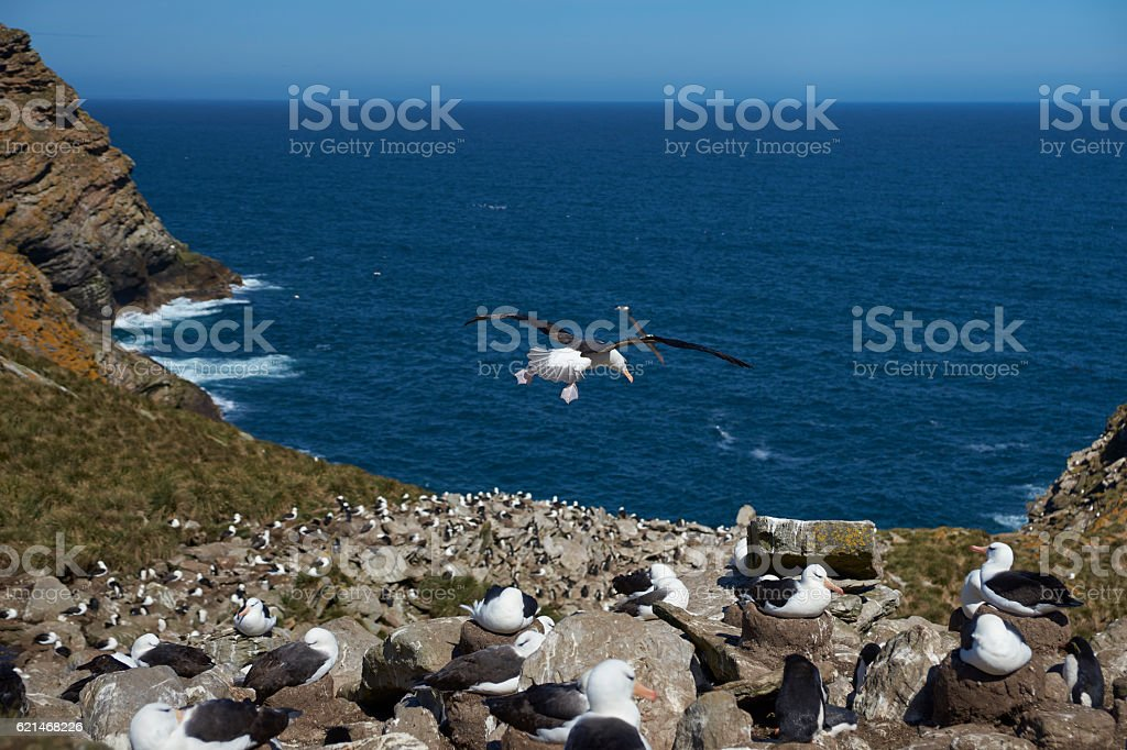 West Point Island in the Falkland Islands stock photo