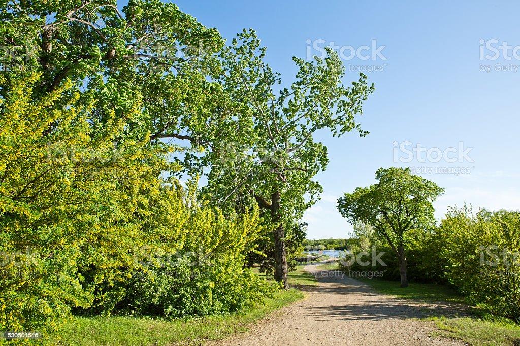 West Wascana Trail with caragana trees in Regina Saskatchewan stock photo