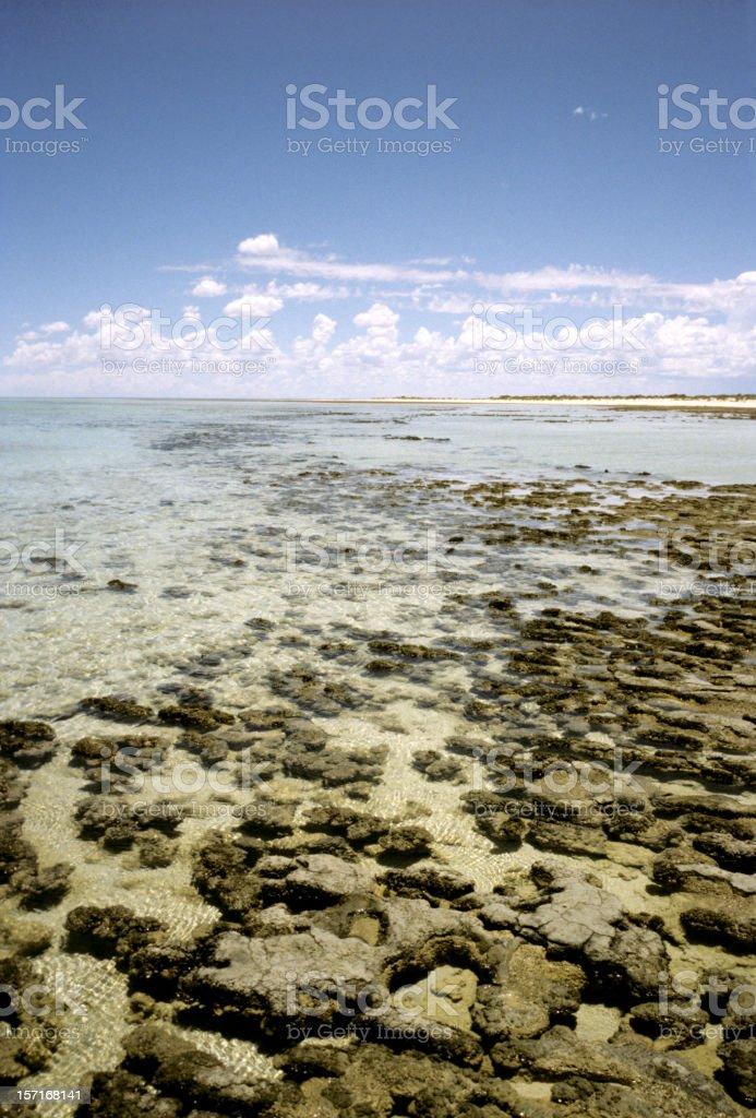 western australia stromatolites stock photo