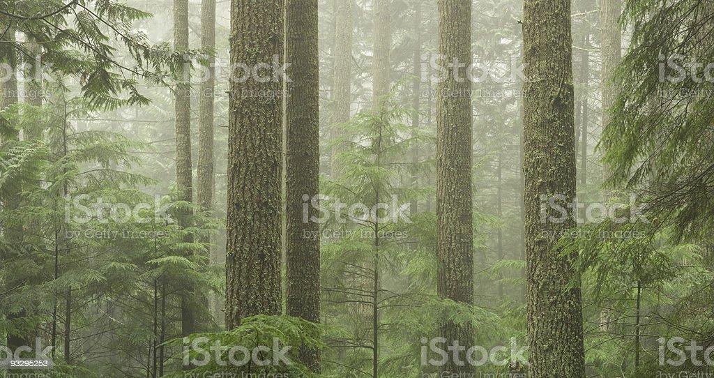 Western Canada Coastal Rainforest stock photo
