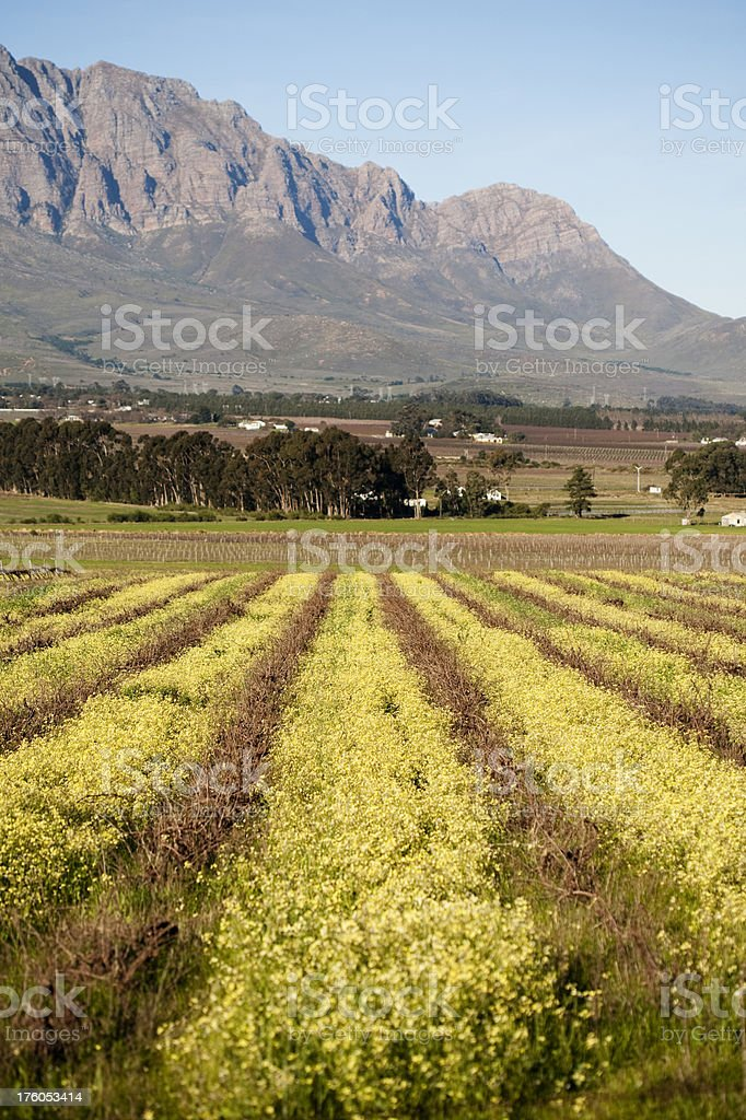 Western Cape Landscape royalty-free stock photo