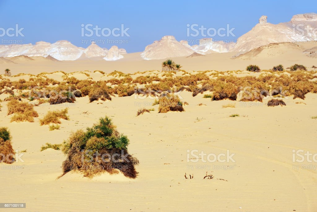 Western desert, Sahara, Egypt stock photo