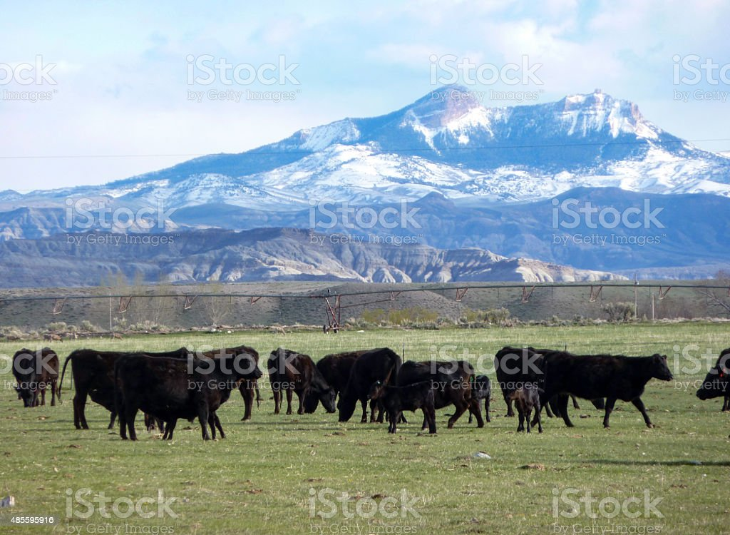 Western Ranch stock photo