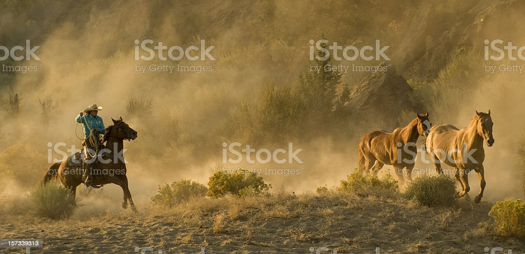 Western Roundup-running horses,cowgirl,backlit dust royalty-free stock photo