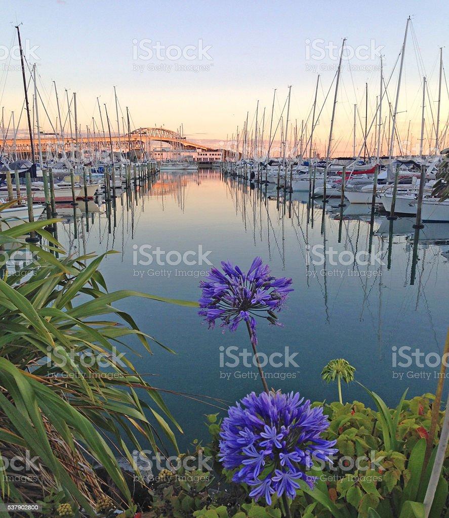 Westhaven Marina at sunrise stock photo