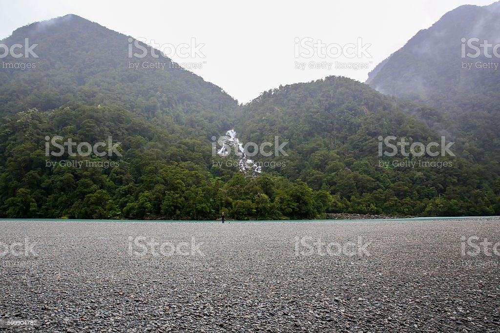 Westland National Park. New Zealand. stock photo