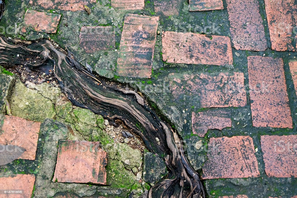 Wet and green algae on brick floor with root stock photo