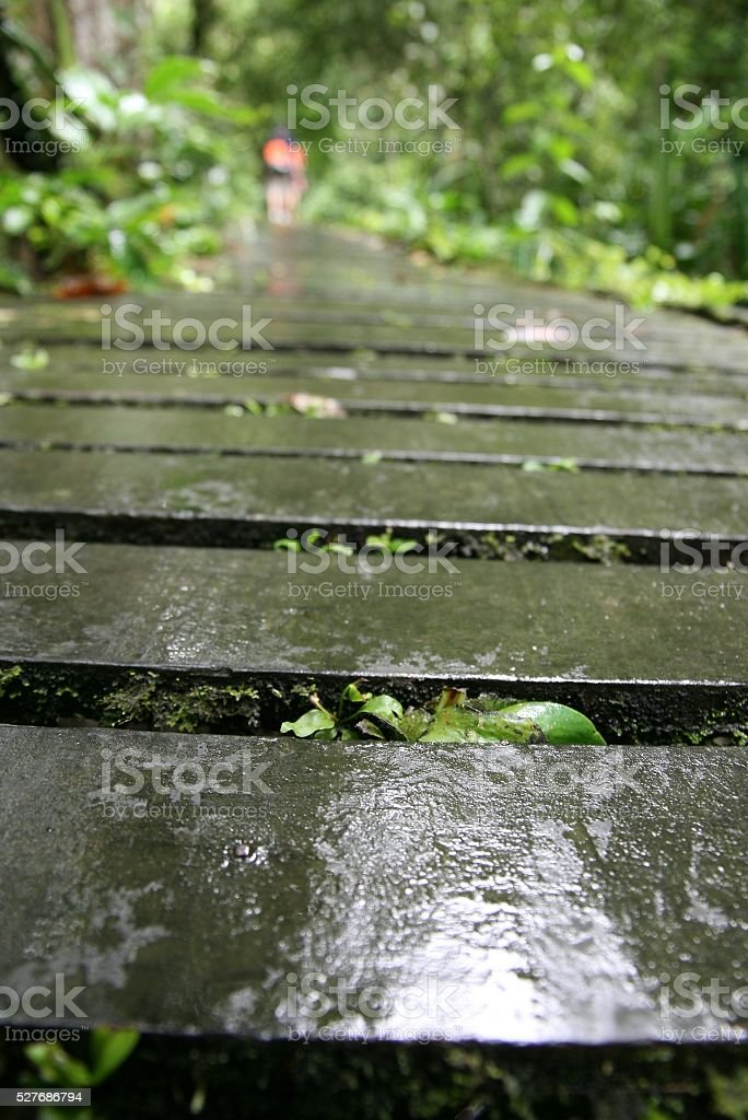 Wet and slippery wooden path stock photo