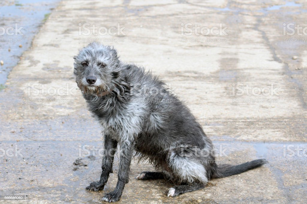 Wet and tired dog stock photo