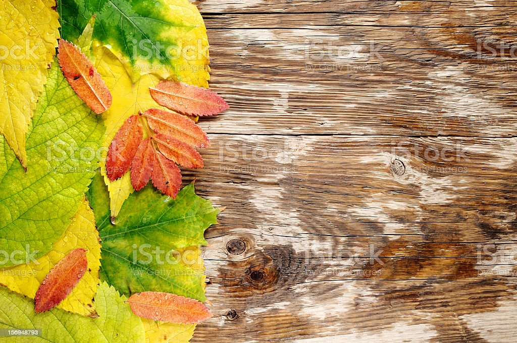 Wet autumn leaves on wood royalty-free stock photo