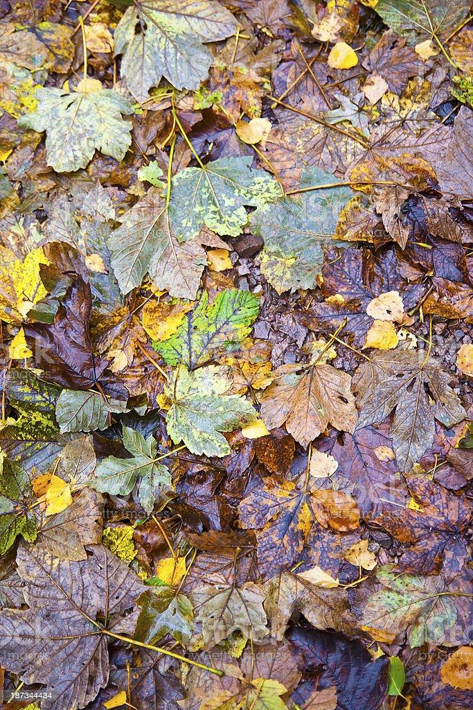 Wet Autumn Leaves stock photo