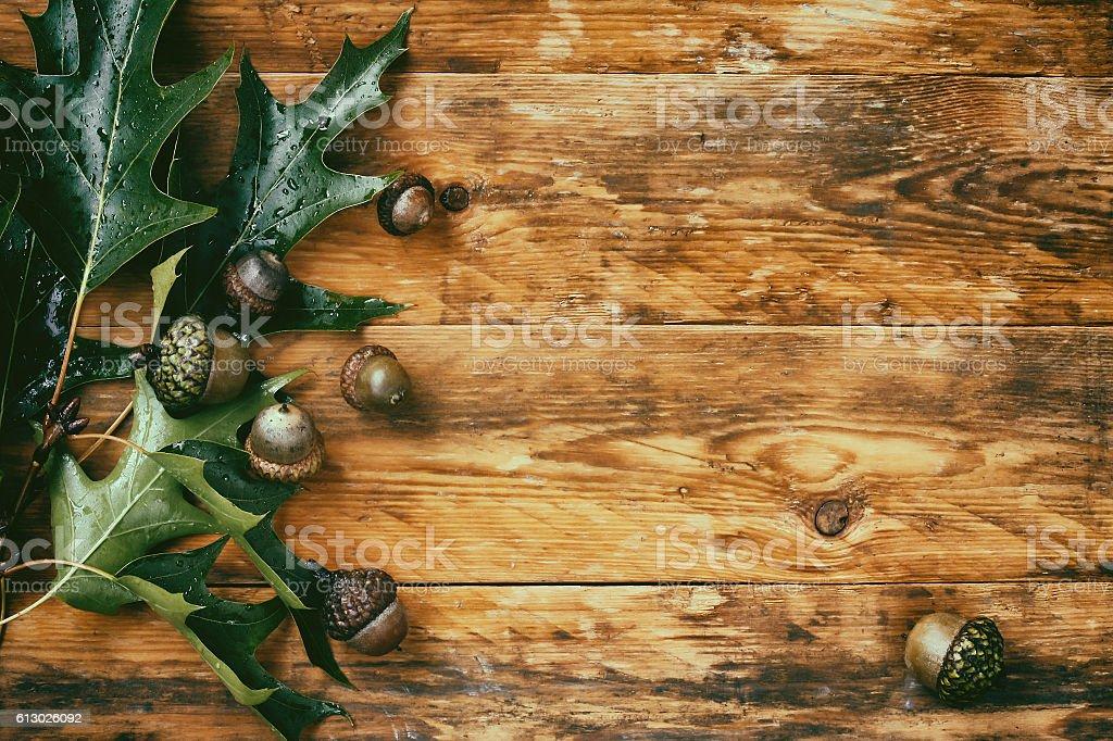 Wet autumn oak branch with acorns stock photo