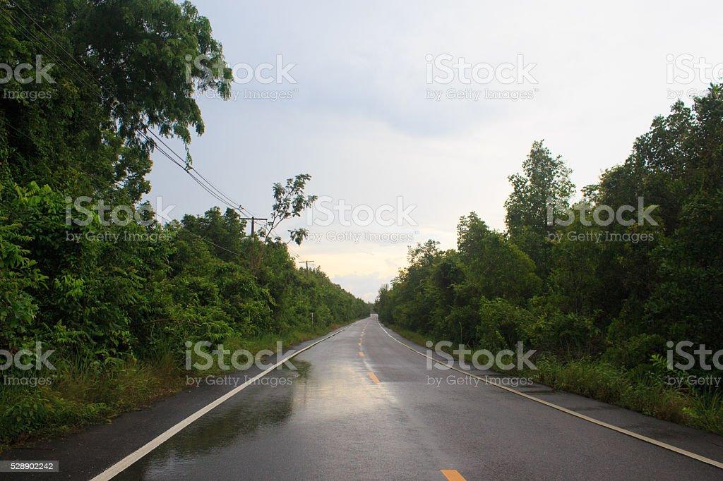 Влажные черные дорога с лес, туман после 30 дождь и туман Стоковые фото Стоковая фотография