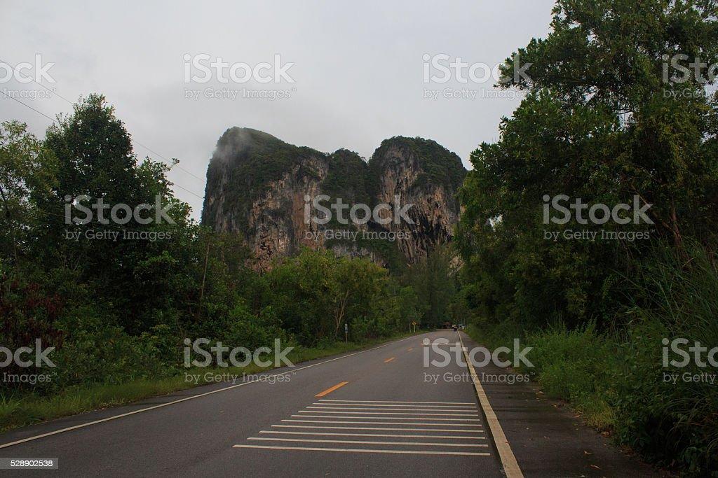 Влажные черные дорога с дерево лес, туман туман после 30 дождь Стоковые фото Стоковая фотография