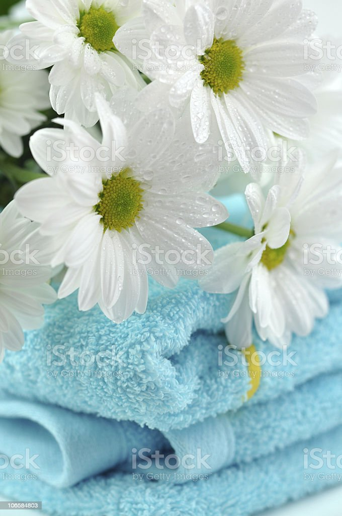 Wet Daisies on a Folded Towels royalty-free stock photo