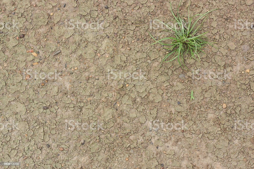 Wet Dirt Mud Land with Little Plant stock photo