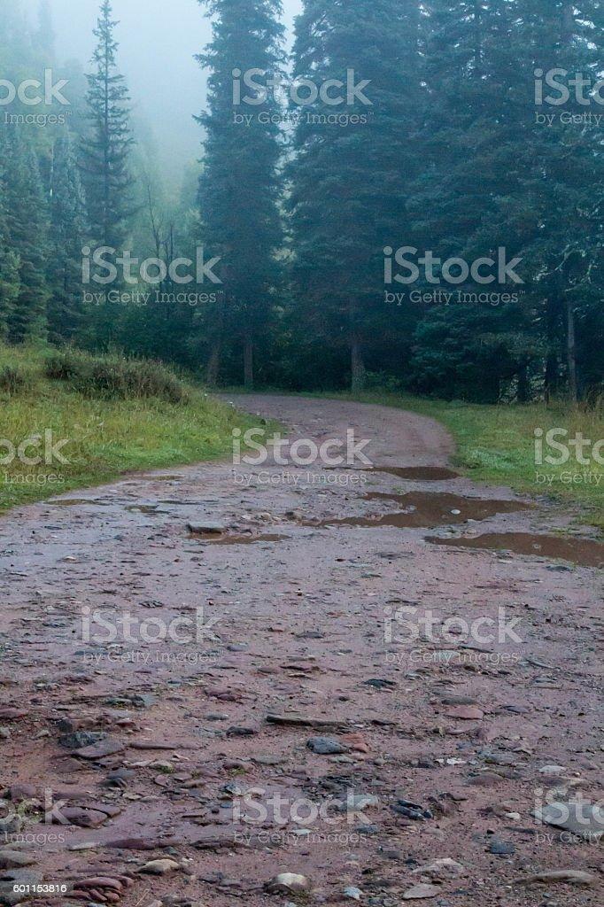 Wet dirt road into spooky mist stock photo