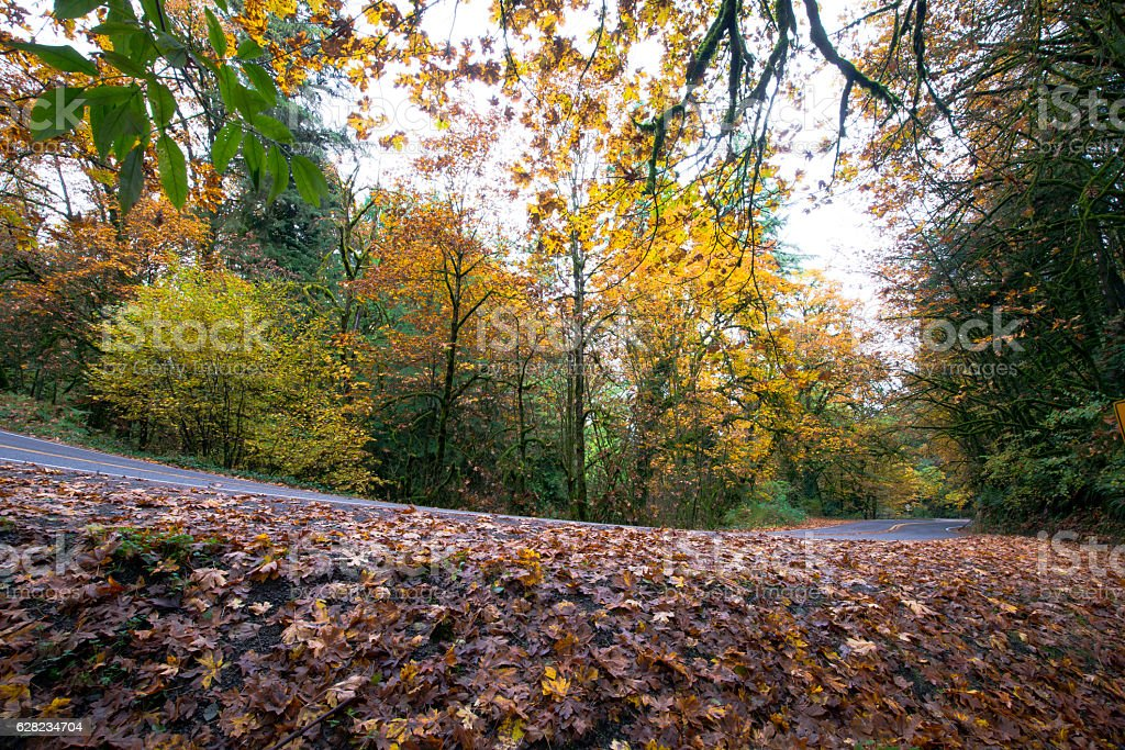 Wet fallen leaves on side of road in autumn forest stock photo
