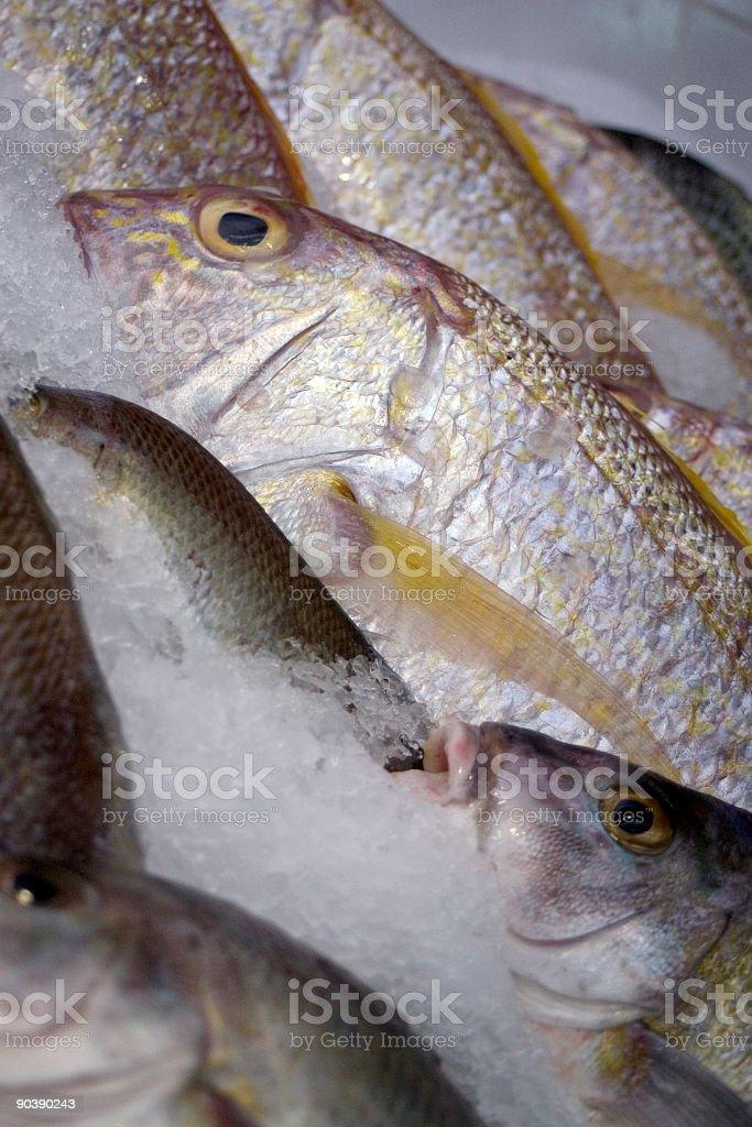 Wet Fish Market stock photo